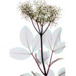 Растения под рентгеном