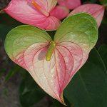 Сердца в природе. Растения