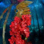 Лучшие подводные фото